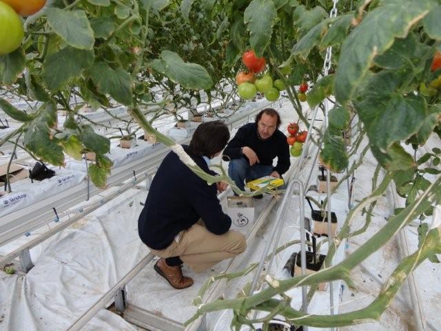 Nederlandse tuinbouwtechnologie toeleveranciers op for Vivero hijuelas