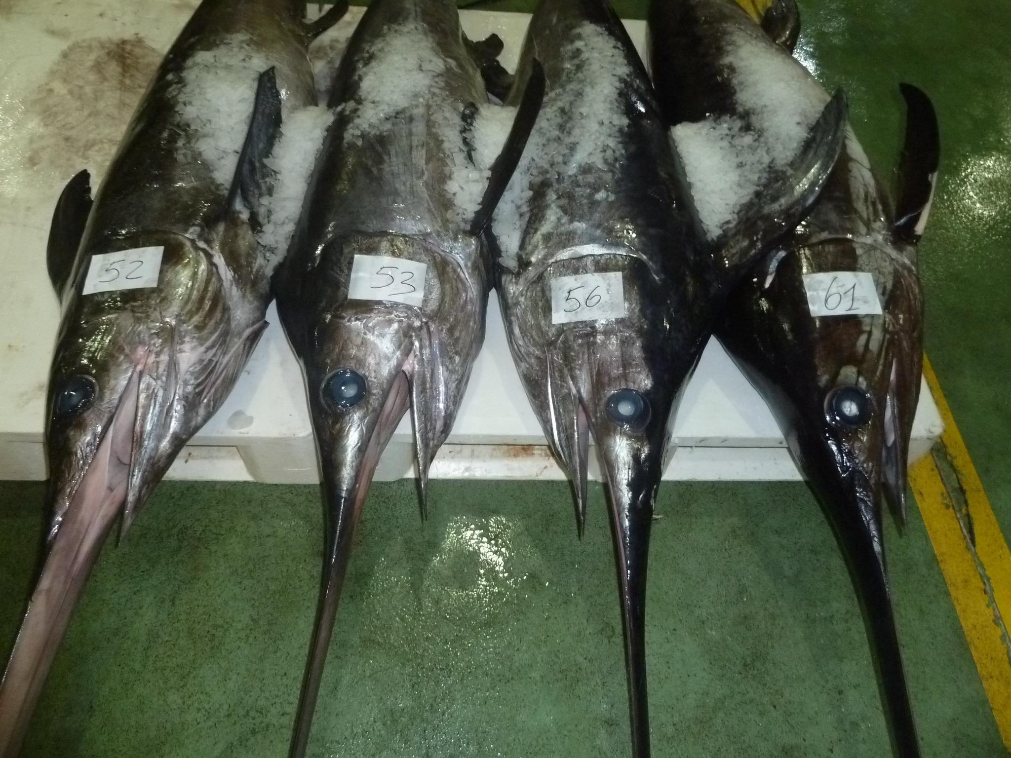 Vishandel op bezoek in vigo transfer lbc for Bureau zwaardvis